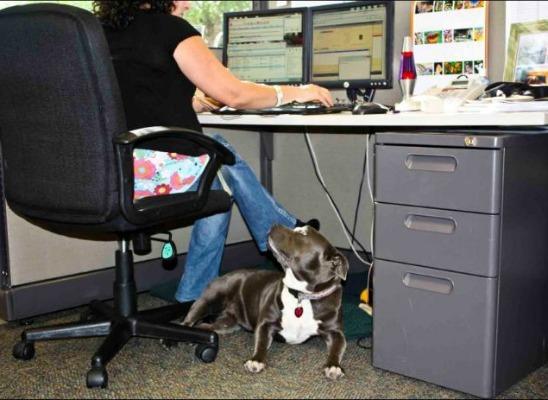 2012/12/120601_dog_work8teaser.jpg